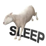insomnia sheep