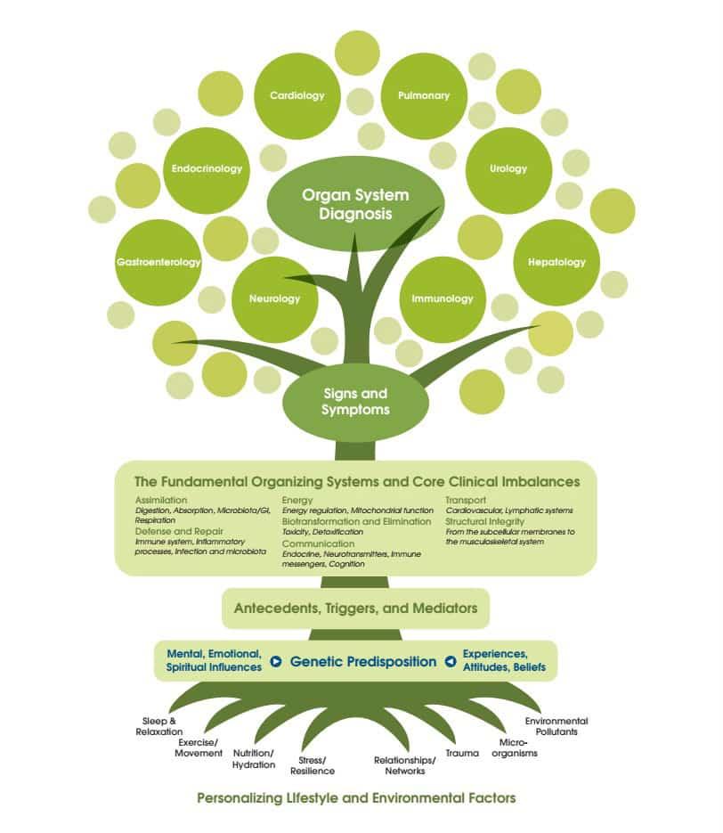 functional medicine los angeles tree